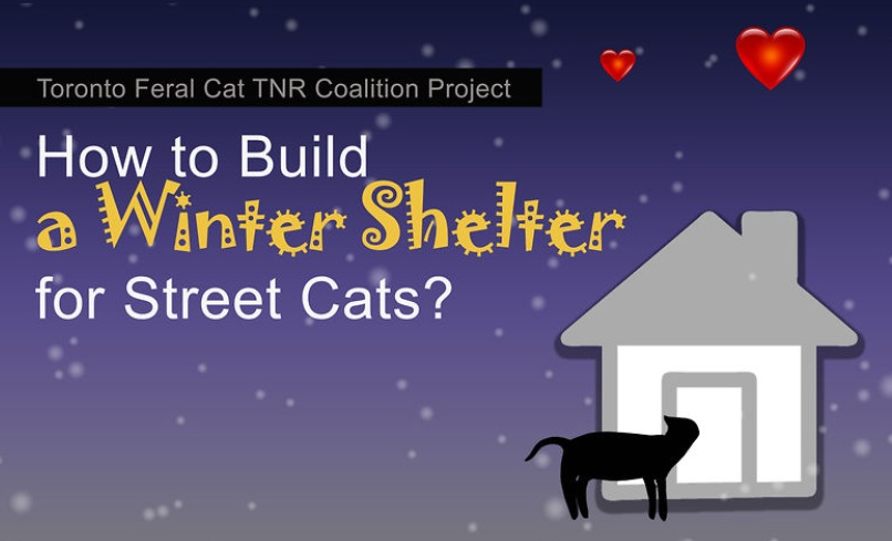 Toronto Street Cats has made our very own step by step DIY video ...