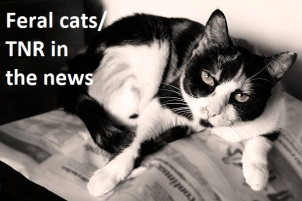 Black and white domestic cat resting above a newspaper.