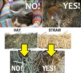 Straw not hay